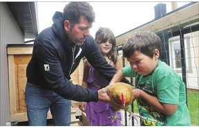 Paul Housley hands a hen to his son, Jack, as his daughter, Riley, 7, looks on in his backyard chicken coop.