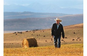 Rancher Gary Akins is a Millarville area rancher who says he's had 10 calves killed and another three seriously injured by grizzly bear activity in his area. He was photographed on his ranch on October 22, 2014.