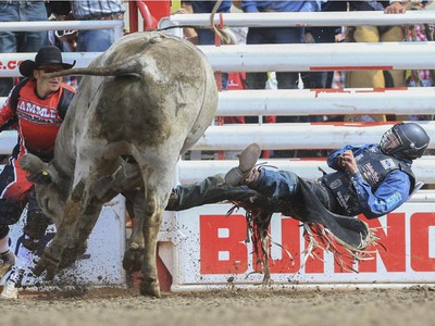 Tanner Byrne falls off Silence Reins after a first place finishing ride during day three bull riding action at the 2015 Calgary Stampede, on July 5, 2015.