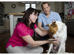 Owners of the business, Vets to Go,  Dr. Wendy McClelland and Greg Habstritt are pictured during a physical examination of Habstritt's mixed breed rescue dog, Macho, performed by Dr. McClelland on Monday, May 20, 2013. The business operates by sending their vets to travel to people's homes to examine ill pets.