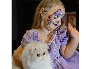 Sascha, 3, plays with Bambino at the annual Calgary Cat Show at Ed Whalen Arena in Calgary, AB., on Saturday, April 16, 2016. The show features feline fun and  several animal rescues to participate and offer cats for adoption.