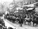 An eight-span bull team wends its way through downtown in 1912 as part of the very first Calgary Stampede parade.