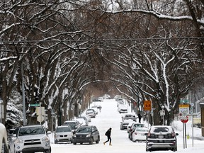 The City of Calgary has completed the $35M recovery measures enacted after the 2014 Snowtember storm that destroyed half of city's urban forest. Darren Makowichuk/Postmedia