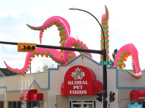 Arms from a giant inflatable squid appear to emerge from the roof of Global Pet Food in Marda Loop along 33 Ave SW. Tuesday, September 17, 2019. Brendan Miller/Postmedia