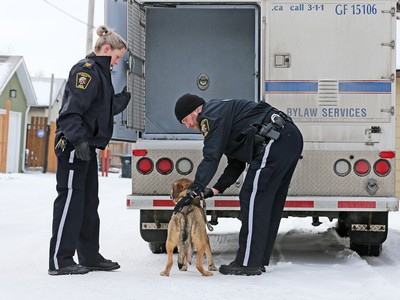 Police and bylaw officers removed about 25 dogs from a home on Malvern Crescent N.E. on Thursday February 13, 2020.