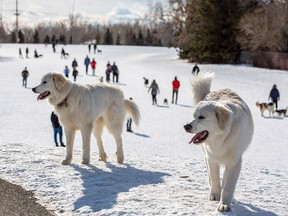 An off leash dog park in Braeside was busy on Sunday, February 16, 2020. On Saturday evening the park was the scene of a serious and seemingly random stabbing of a 15 year-old who was walking a dog with his mother.  Gavin Young/Postmedia