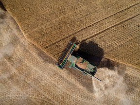 A combine from Stahlville Colony harvests certified seed wheat near Rockyford, Alta., on Aug. 28, 2017.