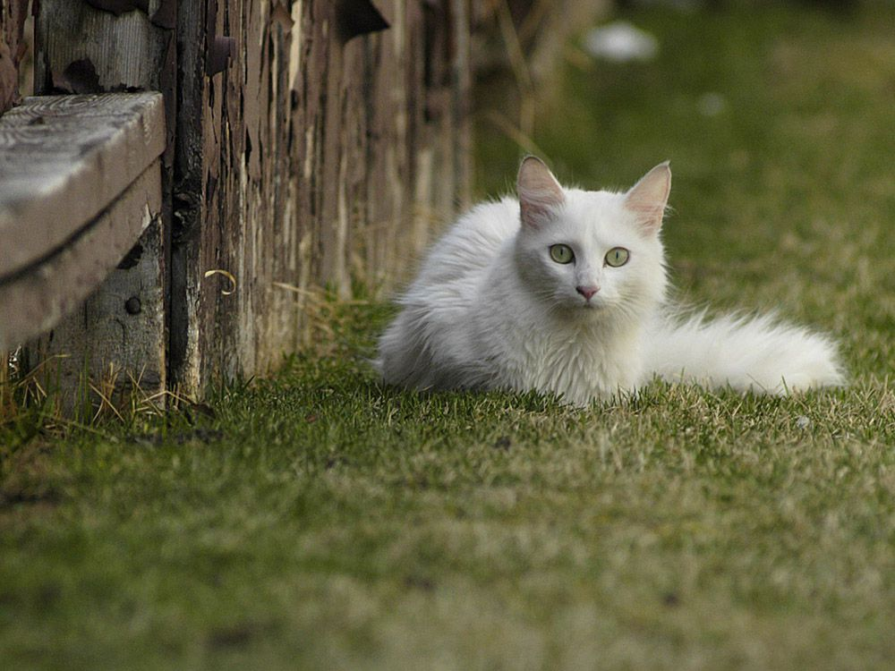The city of Calgary is seeking public input on a new pet bylaw, which will address stray cats, among other issues.