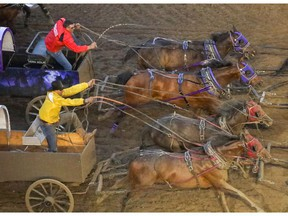 Kurt Bensmiller catches Vern Nolin at the finish in Heat 9 of the Rangeland Derby chuckwagon races at the Calgary Stampede in Calgary, Ab., on Friday July 5, 2019. Mike Drew/Postmedia