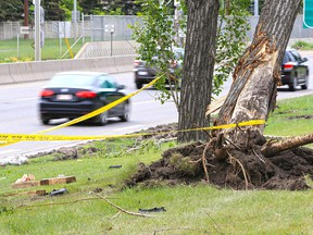 An uprooted tree and police tape mark the scene of a fatal collision along Crowchild Trail near 24th Avenue N.W. A pickup truck lost control and hit the tree early Monday morning June 11, 2018, killing the passenger and injuring the driver.