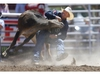 Donalda bulldogger Cody Cassidy hauls down his steer during the Calgary Stampede steer wrestling event on Saturday. Photo by Leah Hennel/Postmedia.