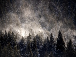 Snow gathered on the trees along the Crowsnest River swirled by the oncoming chinook wind on Tuesday, January 29, 2019. Mike Drew/Postmedia