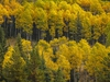 Aspens glow in the Livingstone River valley west of Chain Lakes, Ab., on Tuesday, September 22, 2020. Mike Drew/Postmedia