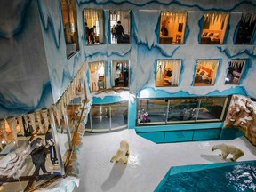 People look at polar bears inside an enclosure at a newly-opened hotel, which allows guests views of the animals in Harbin, China, on March 12, 2021.