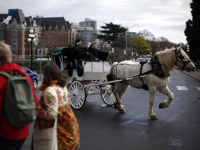 A horse-drawn carriage operates in Victoria, B.C. on Thursday, March 24, 2016.