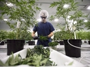 The U.S. Customs and Border Protection agency says in an updated statement that someone working in the legal pot industry in Canada will