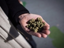 A man holds a handful of dried marijuana on the day recreational cannabis became legal, in Vancouver, on Wednesday, October 17, 2018. (THE CANADIAN PRESS/Darryl Dyck)