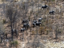 This aerial photograph shows elephants roaming in the plains of the Chobe district in the northern part of Botswana, on September 20, 2018.