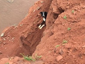 Cesar the dog is shown before being rescued in a handout photo. A Prince Edward Island volunteer firefighter is pleased prior training in cliff rescue was useful in saving a frightened dog that fell onto a rocky outcropping. THE CANADIAN PRESS/HO-Steven Carras