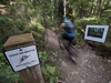 A mountain biker speeds past a photograph on Good Sir Martin bike trail on Mount Seymour in North Vancouver, B.C., Monday, July, 25, 2016.