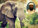 An elephant named after Osama bin Laden reportedly trampled five villagers to death. (Getty Images)