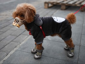 A dog wears a homemade cover over its snout, which its owner said was as a preventive measure against the COVID-19 coronavirus as he stands on a sidewalk in Beijing on Feb. 25, 2020. (GREG BAKER/AFP via Getty Images)