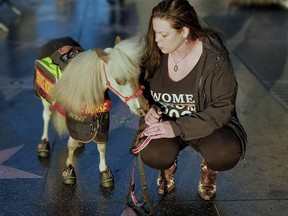 Ronica Froese poses with her miniature service horse Freckle Butt Fred on the Hollywood Walk of Fame in Los Angeles, on Feb. 13, 2020.