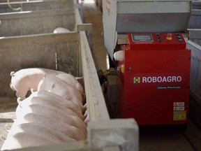 A Roboagro robot feeds pigs while playing classical music on a farm in Brazil, in this undated photo supplied by Roboagro.