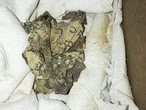A handout picture provided by the Israeli Antiquities Authority on March 16, 2021, shows a picture taken on Nov. 5, 2019, of scroll fragments found in the Cave of Horror in the Judean Desert.