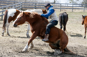 FROM DESK JOB TO LIFE ON A RANC…