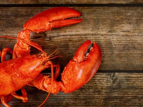 Wooden background with cooked red large lobster. Top view.