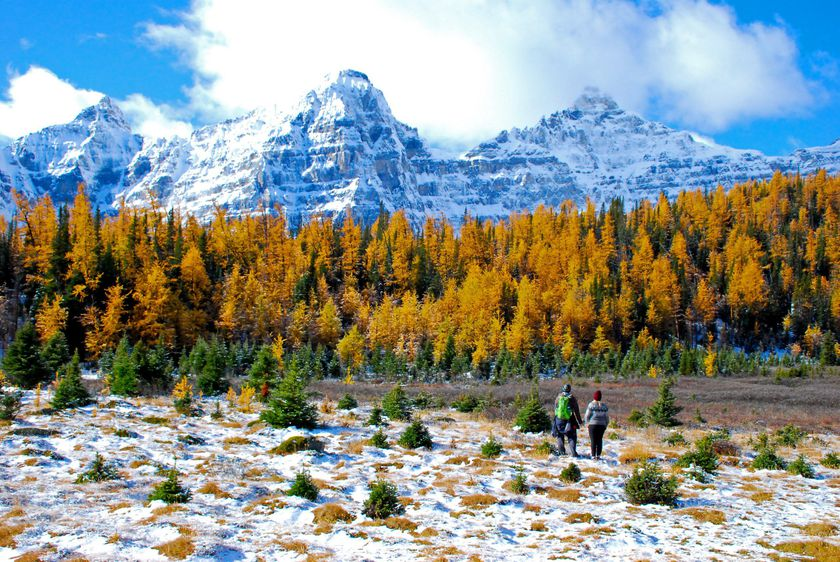 An image of the two hikers standing in the larch Valley in Banff National Park in Alberta, Canada surrounded by golden larches.