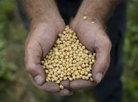 Canadian soybean producers are worried about the impact of a U.S.-China trade deal.