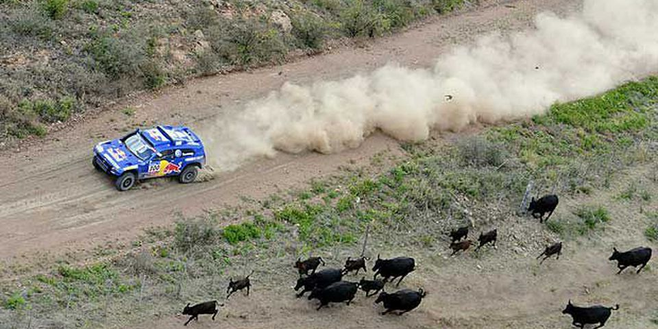 Cows run away as Spain's driver Carlos Sainz steers his Volkswagen with co-driver Lucas Cruz on January 3, 2011 on the stage 2 Cordoba-Tucuman of the 2011 Dakar Rally.