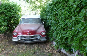This 1955 Cadillac Convertible is among the best barn finds Alyn Edwards has ever come across.