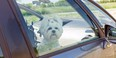 Let your pet get used to your vehicle weeks before you take them on a trip.