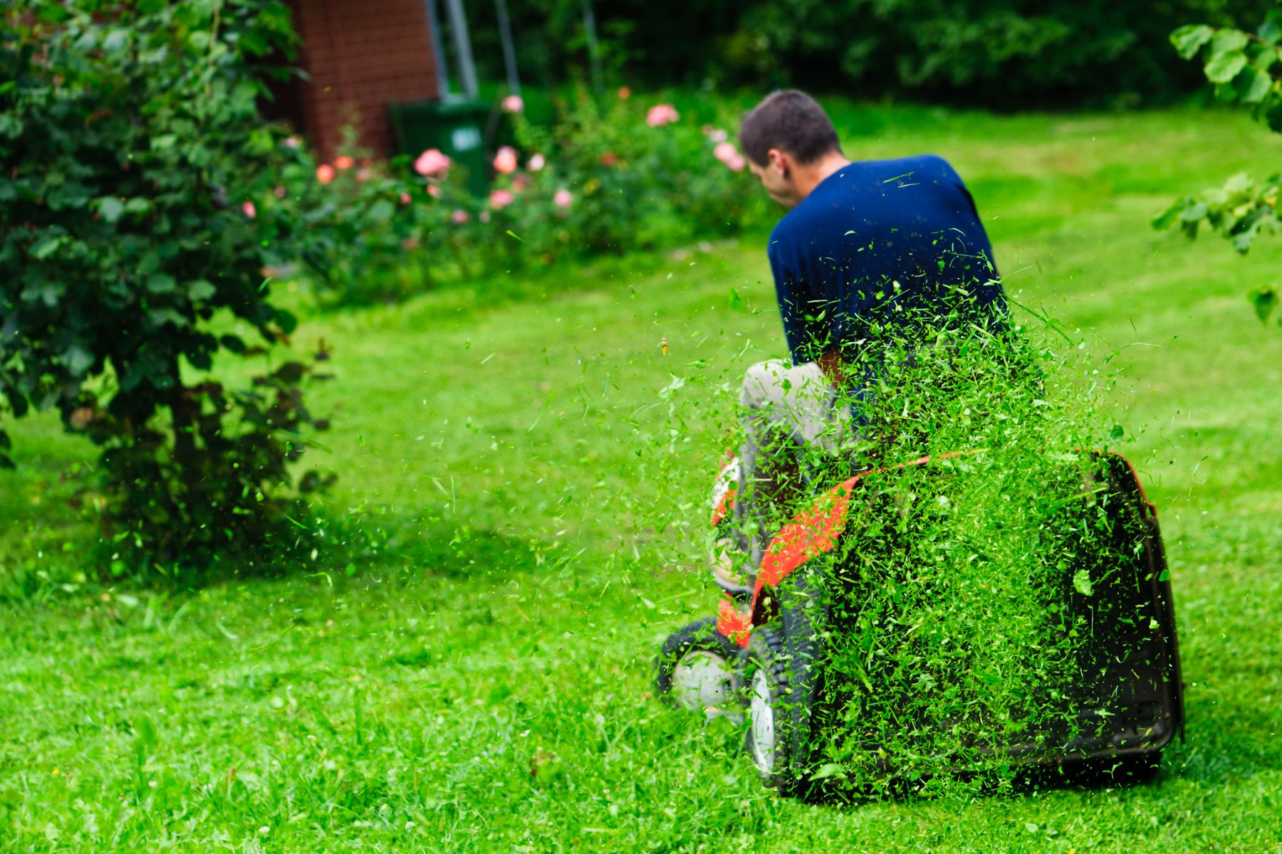 Ride-on lawn mower cutting grass. Focus on grasses in air.