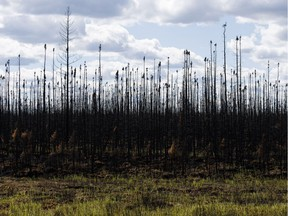 Wildfire damaged forest is seen along Highway 881 outside of Fort McMurray, Alta., on Tuesday May 31, 2016.