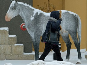 The weather outside in downtown Edmonton on Friday (February 2, 2018) was not fit for humans...or horses.