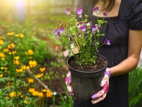 Nine tips for gardeners of every level, whether you're new to planting or whether you've been growing flowers and vegetables for many years.