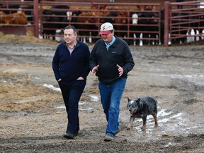 UCP Leader Jason Kenney (left) and farmer Ken Lewis, and Lewis' dog Woody, are seen as Kenney announces a rural crime fighting initiative at Lewis' farm near Sangudo, Alberta on March 27, 2019. Photos by Ian Kucerak /Postmedia