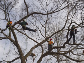 Arborists from the City of Edmonton and Davey Tree Care Services climbed into an Elm tree to save stuffed animals on the branches. Grade one students from across Edmonton learned more about Arbour Day on May 10 2019,at Whitemud Park.
