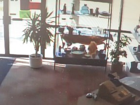 A lone deer wandered through donation doors at the back of the of the Mission Thrift Store at 15222 Stony Plain Road and onto the store's floor in Edmonton.