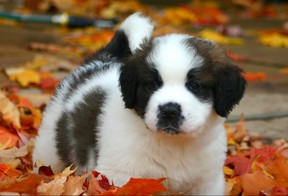 A puppy brings with it both increased responsibility and additional demands on an uncharted future.