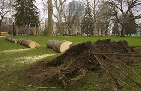 New grass will grow on the soil under a felled spruce tree, but Gerald Filipski recommends adding new soil and dressing the area with rich loam each year.