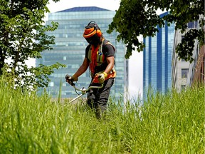 A City of Edmonton maintenance worker trims the grass and weeds at a green space in downtown Edmonton on June 24, 2020.