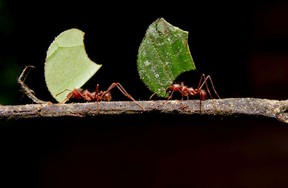 Gerald Filipski recommends using diatomaceous earth, a natural pest control product, to help rid your garden of ants.