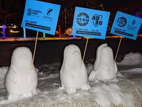 Three of some 800 snow penguins set up on the grounds of the Alberta legislature, are shown in this handout image provided by Jon Mastel, on Thursday, Jan. 28, 2020.