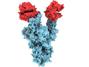 UBC researchers have become the first in the world to capture and publish structural images of the spike protein on B.1.1.7., the highly contagious COVID-19 variant first identified in the UK.