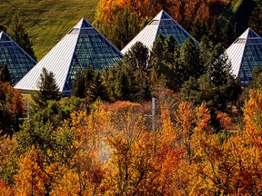 The Muttart Conservatory glistens in the sunlight as it sits nestled among the autumn leaves in Edmonton's river valley on October 4, 2021. (PHOTO BY LARRY WONG/POSTMEDIA)